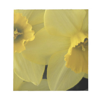 USA, Utah, Cache Valley Daffodils Notepad