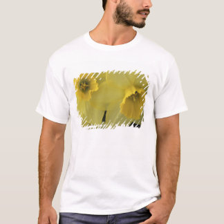 USA, Utah, Cache Valley Daffodils T-Shirt