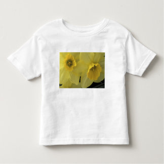 USA, Utah, Cache Valley Daffodils Toddler T-Shirt