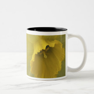 USA, Utah, Cache Valley Daffodils Two-Tone Coffee Mug