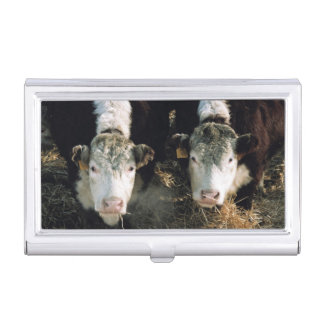 USA, Utah, Cache Valley, Hereford Steers Business Card Holder