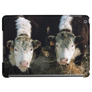 USA, Utah, Cache Valley, Hereford Steers Case For iPad Air