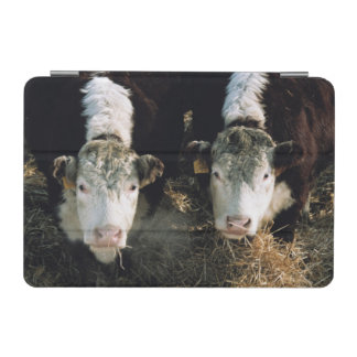 USA, Utah, Cache Valley, Hereford Steers iPad Mini Cover