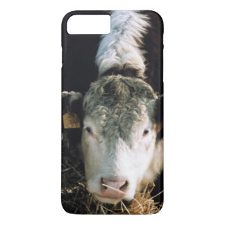 USA, Utah, Cache Valley, Hereford Steers iPhone 8 Plus/7 Plus Case