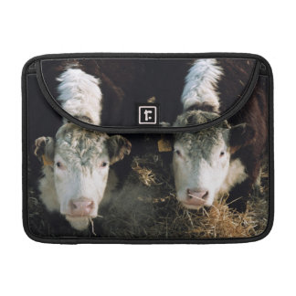 USA, Utah, Cache Valley, Hereford Steers MacBook Pro Sleeves