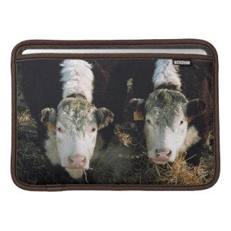 USA, Utah, Cache Valley, Hereford Steers MacBook Sleeve