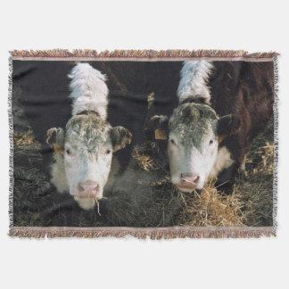 USA, Utah, Cache Valley, Hereford Steers Throw Blanket