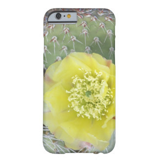 USA, Utah, Canyonlands, NP, Desert Prickly Pear Barely There iPhone 6 Case