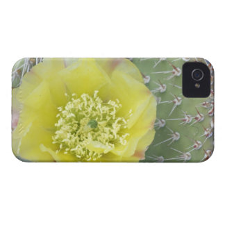 USA, Utah, Canyonlands, NP, Desert Prickly Pear Case-Mate iPhone 4 Cases