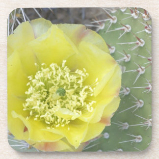 USA, Utah, Canyonlands, NP, Desert Prickly Pear Coasters