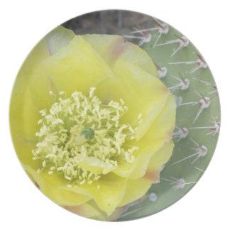 USA, Utah, Canyonlands, NP, Desert Prickly Pear Dinner Plates