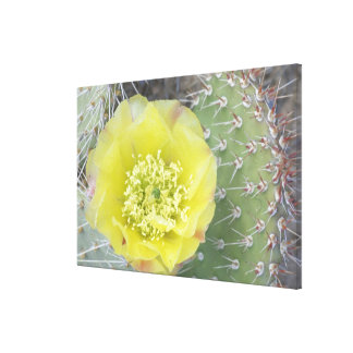USA, Utah, Canyonlands, NP, Desert Prickly Pear Gallery Wrapped Canvas