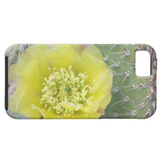USA, Utah, Canyonlands, NP, Desert Prickly Pear iPhone 5 Covers