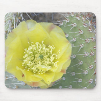USA, Utah, Canyonlands, NP, Desert Prickly Pear Mouse Mat