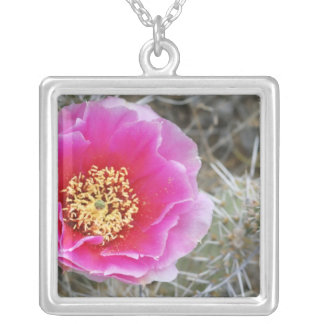 USA, Utah, Canyonlands NP, Desert Prickly Pear Silver Plated Necklace