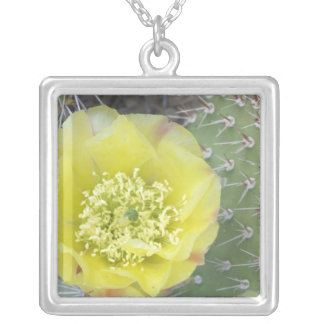 USA, Utah, Canyonlands, NP, Desert Prickly Pear Silver Plated Necklace
