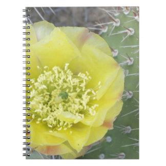 USA, Utah, Canyonlands, NP, Desert Prickly Pear Spiral Note Book