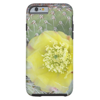 USA, Utah, Canyonlands, NP, Desert Prickly Pear Tough iPhone 6 Case