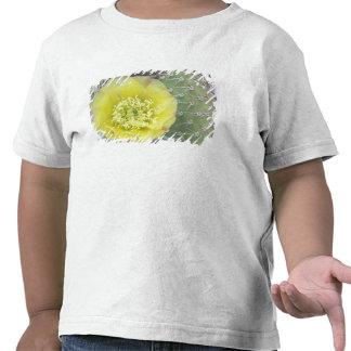 USA, Utah, Canyonlands, NP, Desert Prickly Pear Shirt