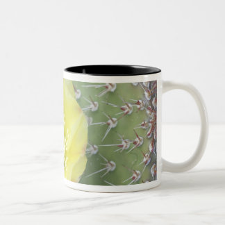 USA, Utah, Canyonlands, NP, Desert Prickly Pear Two-Tone Coffee Mug