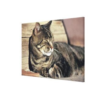 USA, Utah, Capitol Reef NP. Sleeping tabby cat Canvas Print
