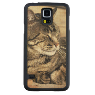 USA, Utah, Capitol Reef NP. Sleeping tabby cat Carved Maple Galaxy S5 Case