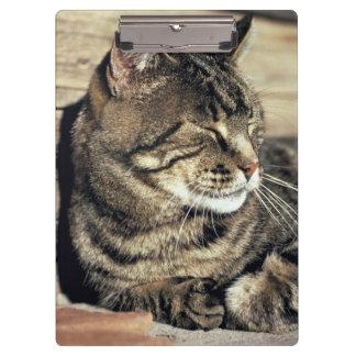 USA, Utah, Capitol Reef NP. Sleeping tabby cat Clipboards