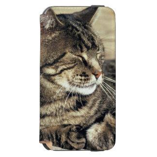USA, Utah, Capitol Reef NP. Sleeping tabby cat Incipio Watson™ iPhone 6 Wallet Case