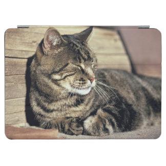 USA, Utah, Capitol Reef NP. Sleeping tabby cat iPad Air Cover