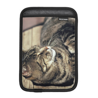 USA, Utah, Capitol Reef NP. Sleeping tabby cat iPad Mini Sleeve