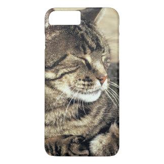 USA, Utah, Capitol Reef NP. Sleeping tabby cat iPhone 8 Plus/7 Plus Case