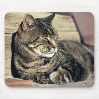 USA, Utah, Capitol Reef NP. Sleeping tabby cat Mouse Mat