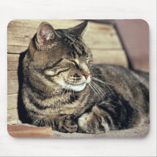 USA, Utah, Capitol Reef NP. Sleeping tabby cat Mouse Pad