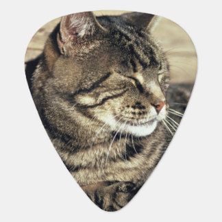 USA, Utah, Capitol Reef NP. Sleeping tabby cat Plectrum
