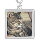USA, Utah, Capitol Reef NP. Sleeping tabby cat Silver Plated Necklace