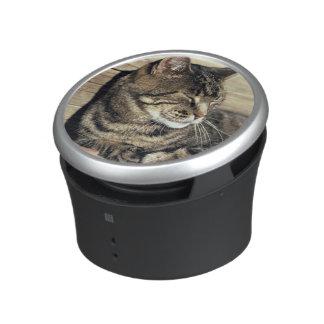 USA, Utah, Capitol Reef NP. Sleeping tabby cat Speaker