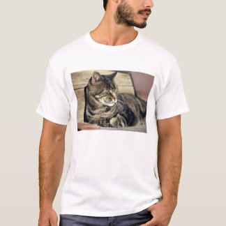 USA, Utah, Capitol Reef NP. Sleeping tabby cat T-Shirt
