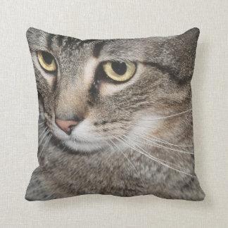 USA, Utah, Close-up of domestic cat Cushion