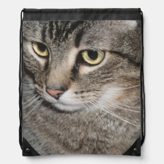 USA, Utah, Close-up of domestic cat Drawstring Bag