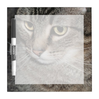 USA, Utah, Close-up of domestic cat Dry Erase Board