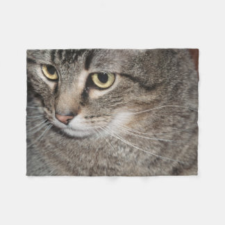 USA, Utah, Close-up of domestic cat Fleece Blanket
