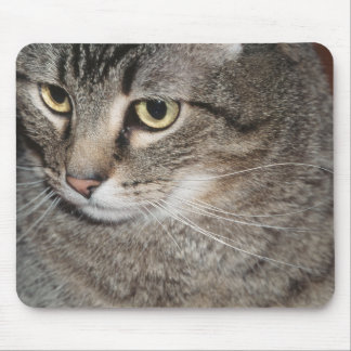 USA, Utah, Close-up of domestic cat Mouse Pad