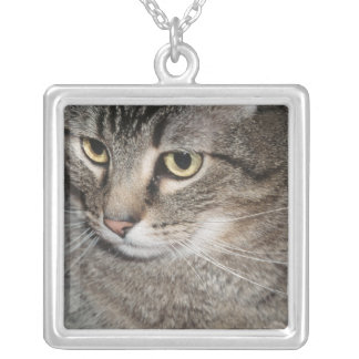 USA, Utah, Close-up of domestic cat Silver Plated Necklace