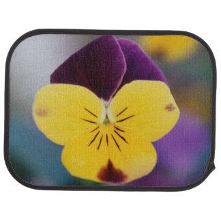 USA, Utah, Close-Up of Viola tricolor in garden Car Mat