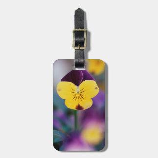 USA, Utah, Close-Up of Viola tricolor in garden Luggage Tag