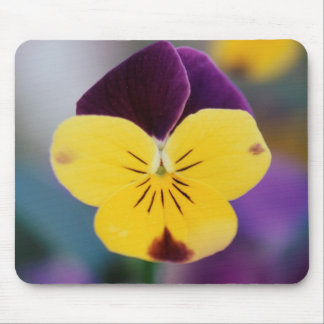 USA, Utah, Close-Up of Viola tricolor in garden Mouse Pad