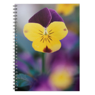 USA, Utah, Close-Up of Viola tricolor in garden Notebooks