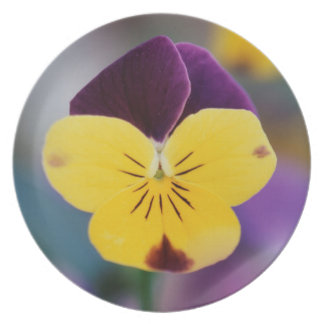 USA, Utah, Close-Up of Viola tricolor in garden Party Plates