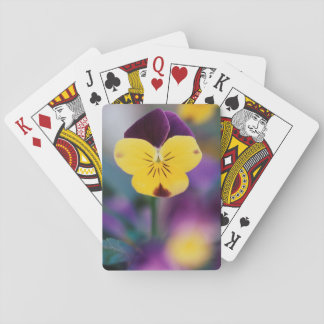 USA, Utah, Close-Up of Viola tricolor in garden Playing Cards