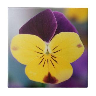 USA, Utah, Close-Up of Viola tricolor in garden Tile